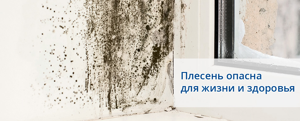 Как очистить плесень в домашних условиях 258